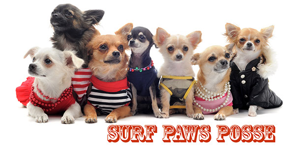 Graphics Design for Surf Paws